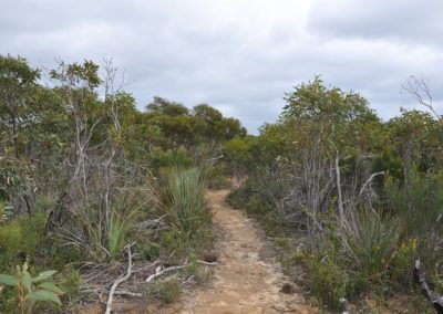 ki-wilderness-trail-track